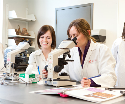 Students studying in laboratory at microscope