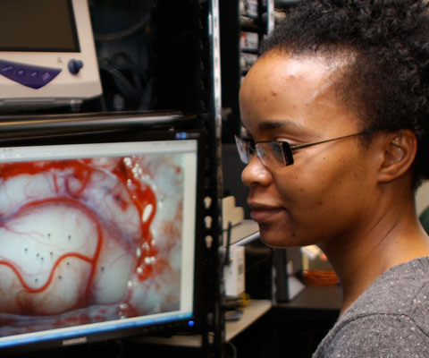 Female researcher looking at images of heart on computer.
