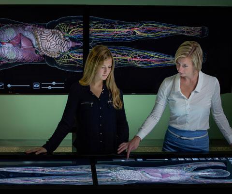 Deux chercheuses regardent à une grande radiographie en couleur d