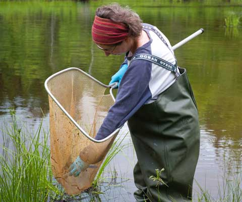 Female student wearing hip waders takes a specimen from a large net in the river.