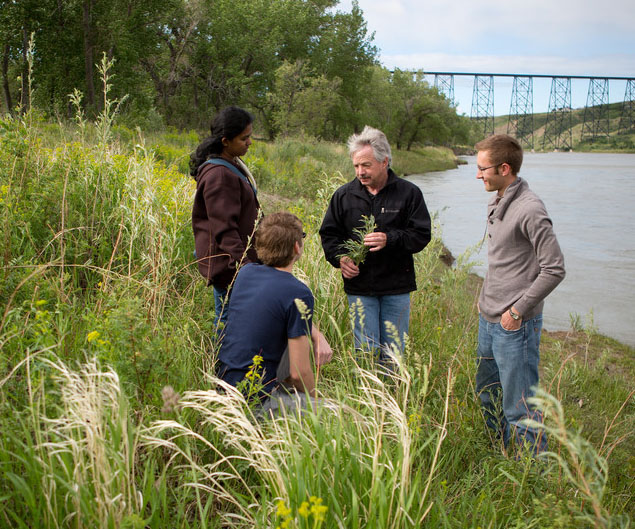 Four researchers stand in a field on the edge of a lake to study the plants.