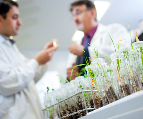 Two researchers study plants and soil in test tubes.