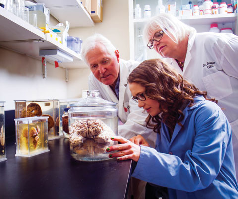 A young, early-career female researcher analyzes a human brain in a jar with the help of two older researchers.