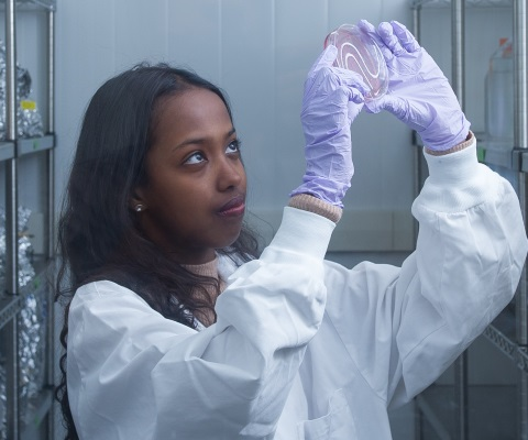 Female researcher looking at a petri dish.