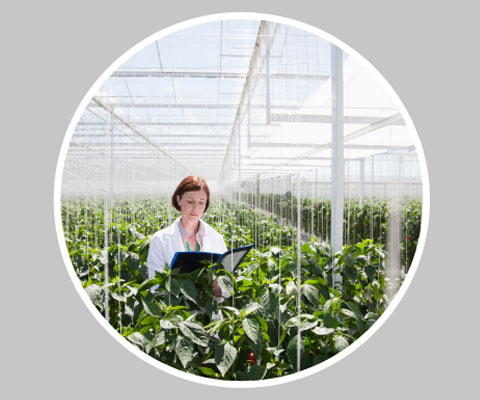 Female researcher working in a hothouse full of plants.