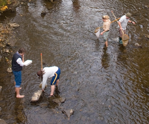 4 researchers working in a shallow river. 3 of them are using nets.