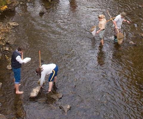 4 chercheurs travaillent dans une rivière peu profonde. 3 d